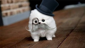 inspector dog